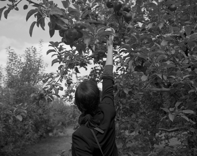'Allison (Apples)' © Shane Lavalette
