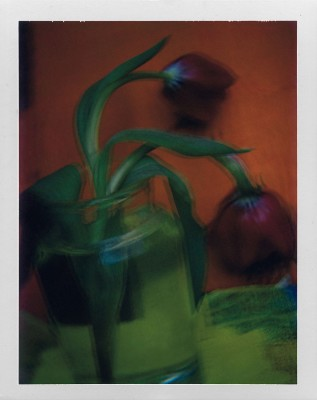 Les tulipes 2003 © Sarah Moon courtesy Michael Hoppen Gallery