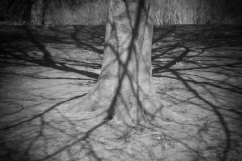 Susanne Goertz- shadow – Muenster, 2013